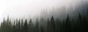 Твин Пикс лес