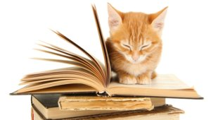 Тихое чтение
